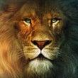 ライオンと羊