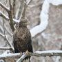 オジロの雪絡み…^^