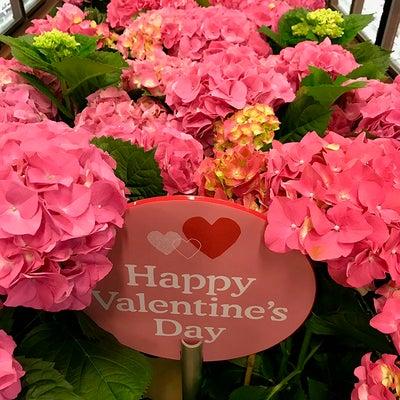 アメリカ(ハワイ)のバレンタインデー♪の記事に添付されている画像