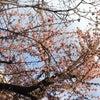 春イチの画像