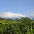 バリ島 わんこ達の鳴…
