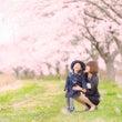 【満開の桜の下でファ…