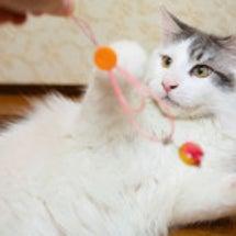 猫にチョコは厳禁!な…