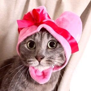 猫に優しいスタイ型首輪に和柄が新登場!の画像