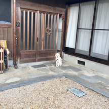 """""""犬好きは悶絶!?秋…"""
