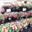 ★バレンタインの花束…