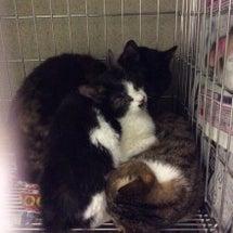 センター収容猫