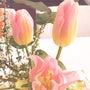 ピンクと黄色のグラデ…