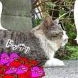 【 猫にチョコならぬ…