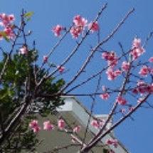 2月中旬の沖縄