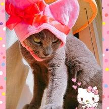 ねこバレンタイン