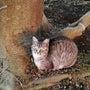 真冬の地域猫