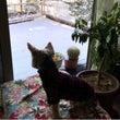 久しぶりの雪とデカヨ…