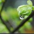 雨水 うすい