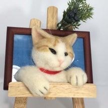 茶トラ白の斜め猫さん