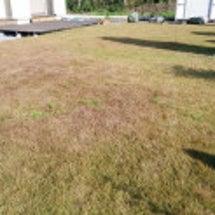 TM9芝刈り