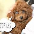 【ダイソー】大人気の…