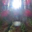 妖精の森♪