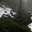 雪とコケと森の中☆