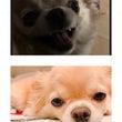 愛犬の表情