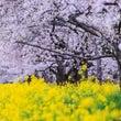 【お茶会開催♪】3月…