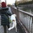 駿府城公園界隈を散歩