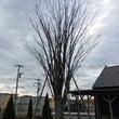 木と話す講座