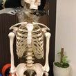 骨盤の回旋と肋骨下角