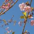 春さがし(2)