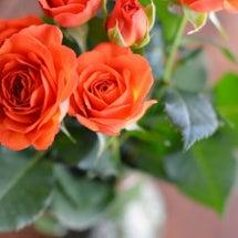薔薇とあぺりら