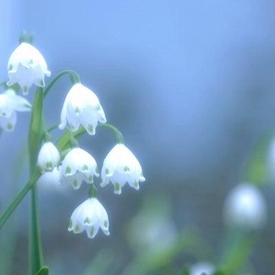 【誕生花】2月18日の記事に添付されている画像