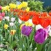 春を待ちわびるの画像