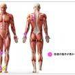 「有痛性外脛骨」を積…