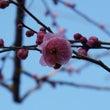 ★春もすぐそこに★