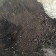 牛糞堆肥をいただきま…
