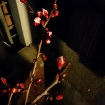 春だねぇ~♪(*^^…