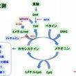 ☆☆葉酸とメトホルミ…