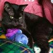 京都 舞鶴市の 黒猫…