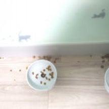 猫食器の見直し