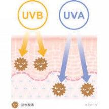老化の原因紫外線を徹…