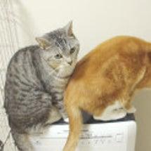 猫にとって空気清浄機…
