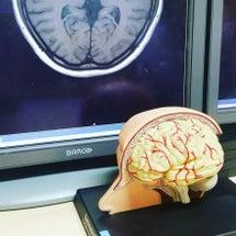 漢方的「脳」とは?
