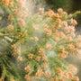 そろそろ花粉の時期で…