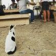 猫背な猫の背