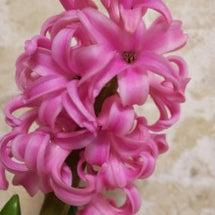 お花にまつわるエトセ…