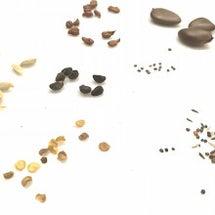 ta Seed