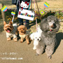 今日の犬の幼稚園!