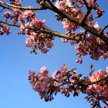 春を感じながら