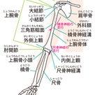 膝の裏が痛い?逆関節になってませんか?エクササイズで解消しよう!の記事より