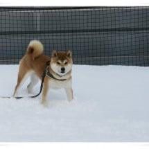 おとんと雪投げ遊び